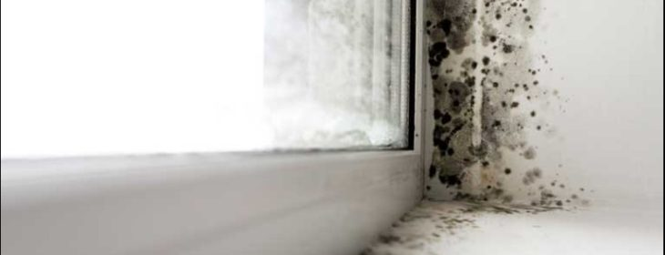 How to identify mould in your home