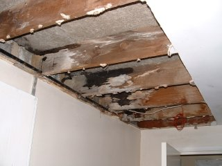 wet and dry rot page